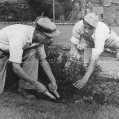 1956 - Bart & his brother maintaining Trenton Parks